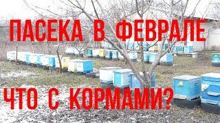 Пасека в феврале результат подкормки пчел медом Зимовка пчел в разных типах ульев