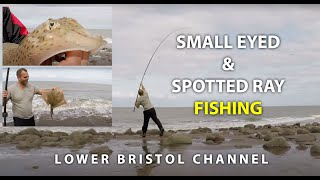 Fishing For Small Eyed and Spotted Rays- Lower Bristol Channel