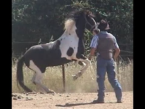 Horse Training - Cure Aggressive Horse Behavior with Mike Hughes, Auburn  California
