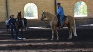 Teaching a stallion to control himself around other horses.