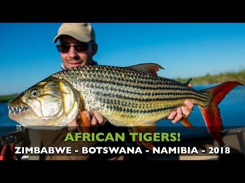 CATCHING BIG TIGERFISH IN THE ZAMBEZI RIVER IN AFRICA