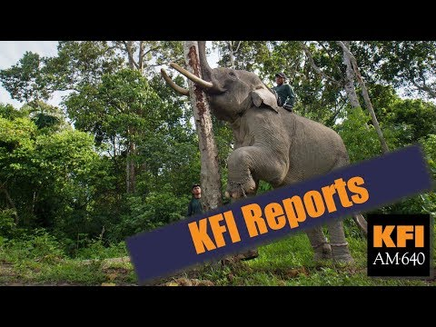 KFI Reports - Conservationists in LA have poached the president's tweets on Elephant trophies