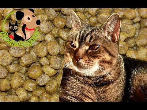 Вопрос: Почему кот ест только свеженасыпанный корм?