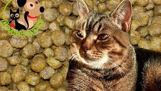 Какой выбрать корм? Как выбрать корм для кошки/собаки?