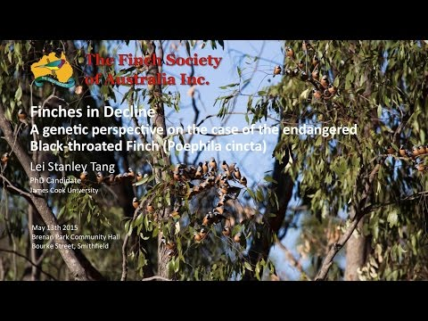 Finches in Decline. A genetic perspective on the case of the endangered Black-throat Finch