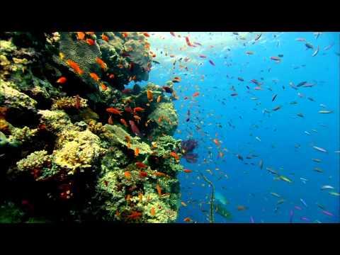 Colorful Fish Live Wallpaper