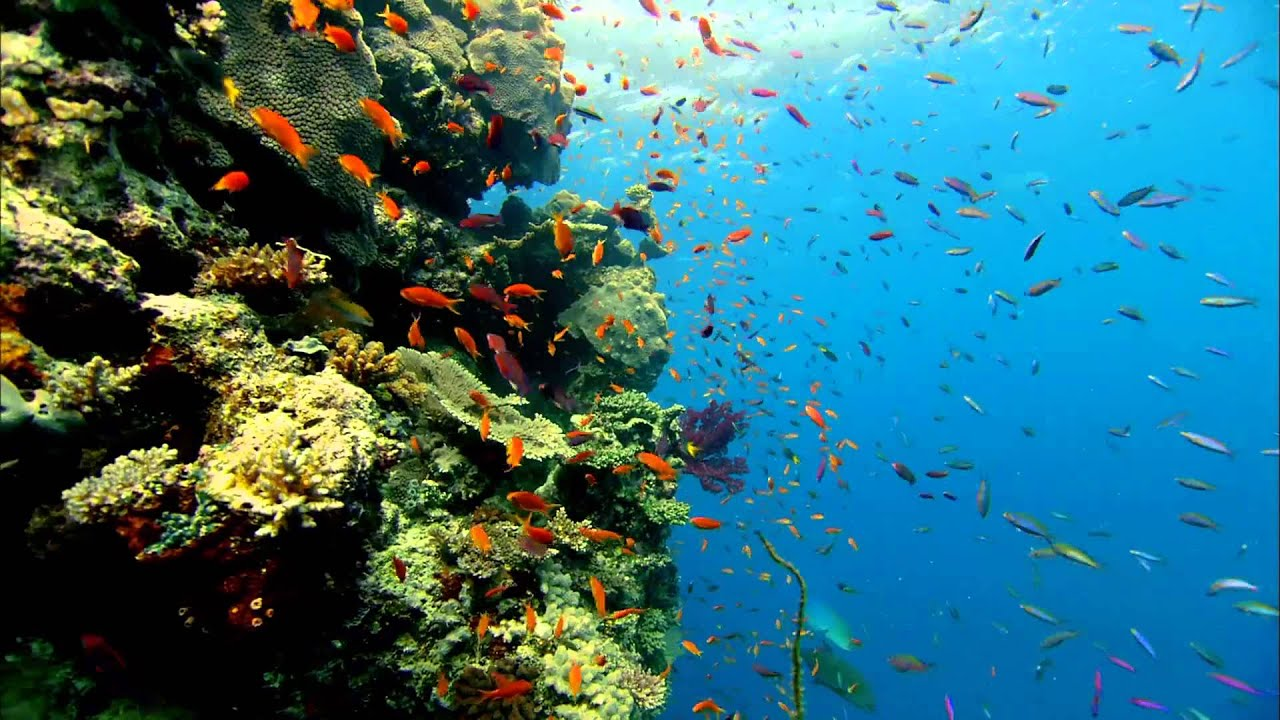 Colorful fish Live Wallpaper - YouTube