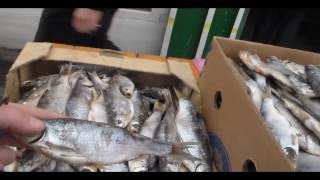 Маленький обзор зимних водоёмов .Запорожье 25.01.2017.(Любители зимней рыбалки ,часто задаются вопросом КУДА ПОЕХАТЬ ПОРЫБАЧИТЬ ., 2017-01-25T05:45:29.000Z)