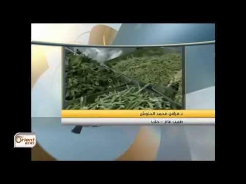 جولة الصباح  الطب بالأعشاب دواء الفقراء في سوريا/الجزر النهرية في الفرات وخطر الزوال ج1