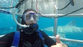 Great White Shark Cage Diving in South Australia - Port Lincoln