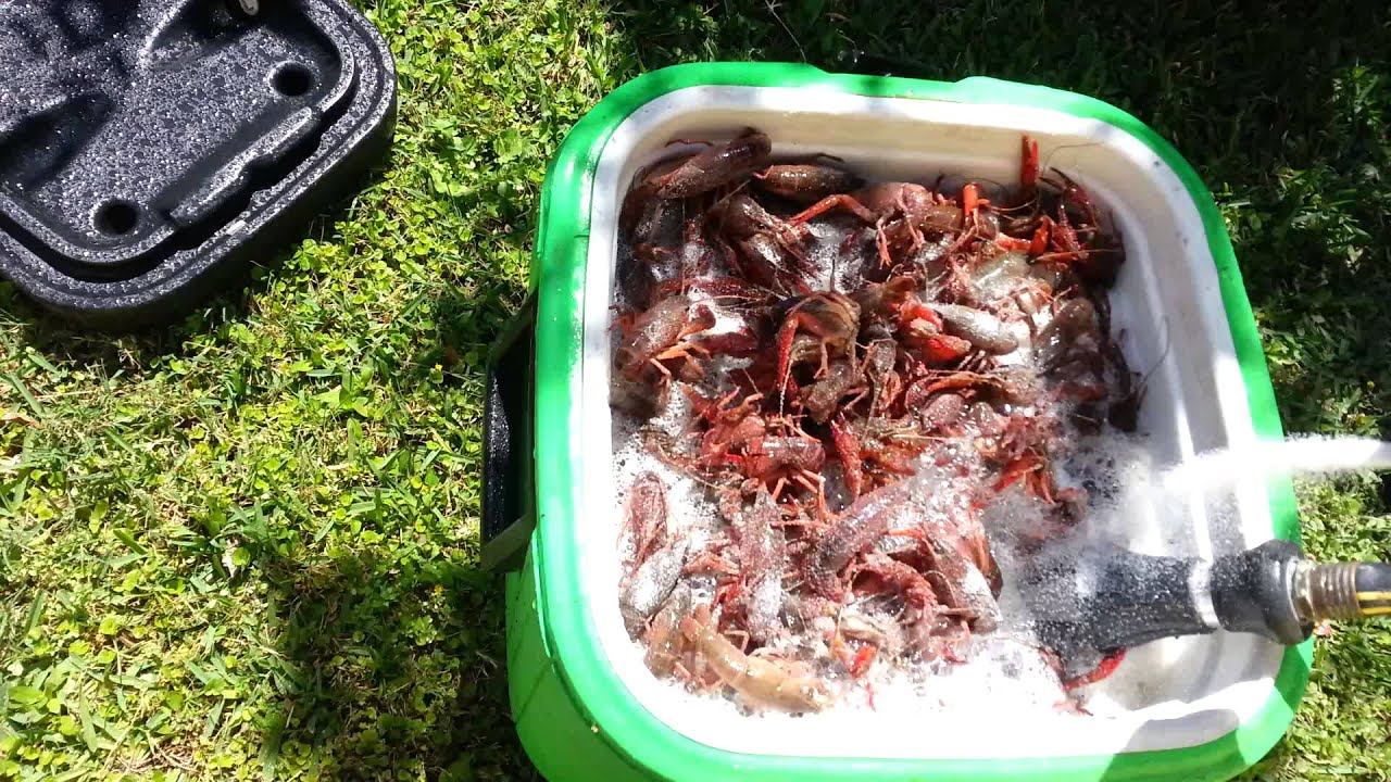 Cleaning The Crawfish