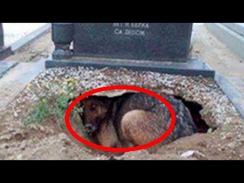 Они думали, что эта собака скорбит по своему хозяину, пока не увидели, что находится под ней!