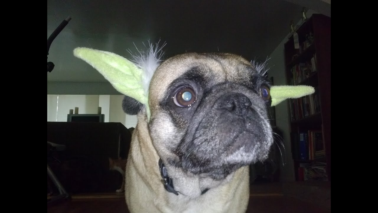 Pug Clothes - Starwars Outfits & Pink Boots With Fur - YouTube