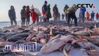 [中国新闻] 吉林松原:查干湖开启冬捕大幕 | CCTV中文国际