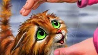 Котята - тигрята.
