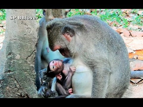 Jade Please Let Baby Monkey Nurse - SP BBlover - He Too Young