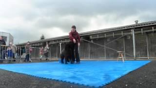 Baixar 20160306 Demo doggydance Mechelen Dierenbescherming Els en Bella