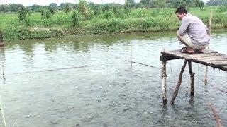Tin Tức 24h : Nhiều hộ nuôi thủy sản ven sông Đồng Nai thiệt hại do triều cường dâng cao