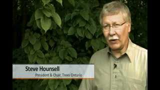 120604- trees ontario sd not H.264.mp4