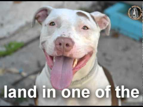 New York Animal Rights Alliance America