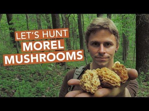 Let's Hunt Morel Mushrooms!