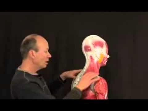 Discover Acupuncture Meridians