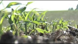 Corn Planting Depth (From Ag PhD #573 3/29/09)