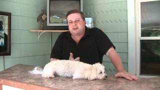 Dog Training Business - Why Your Advertising Does Not Work