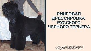 дрессировка русского черного терьера. Риногвая дрессировка терьера