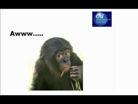 Are Agilists the Bonobos of Software Development?