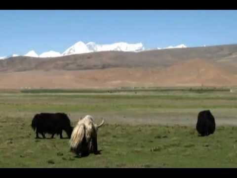 Connaissez-vous bien le yak?