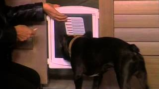 Bobtail: Ansie Teaches Us How To Teach Our Dogs To Use A Doggy Door