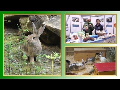 10 Regeln der Kaninchen-Haltung | TierheimTV informiert