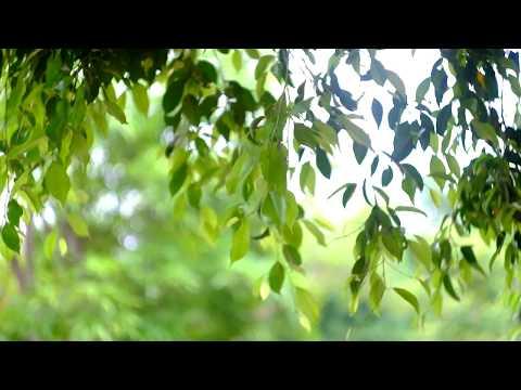 Helios 44M on Fujifilm X-E1 test video