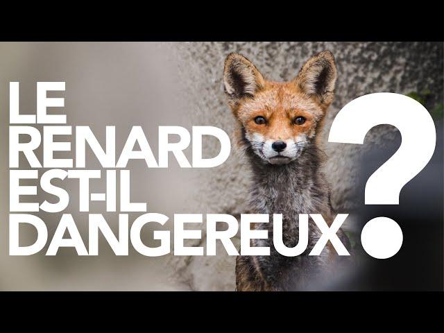 Le renard est-il un danger pour l'Homme ?
