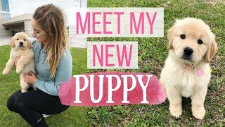 WE GOT A PUPPY! 😭💕 VLOG: Picking Up Our New Baby | 8 week old Golden Retriever