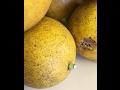 Why Black Spots on Lemons |Daphne Richards |Central Texas Gardener