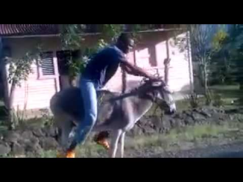 Man rides donkey like a bike