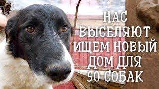 Нас выселяют, новый дом для 50 собак. Надеемся не затопит.
