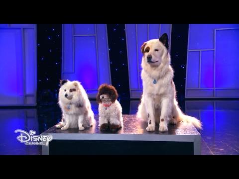 Dog with a Blog - Il segreto di Stan svelato a tutto il mondo - Dall