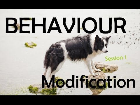 Behaviour Modification Training With Luna -Session 1 The Assessment
