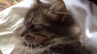 Кот, который бухал всю ночь. Спящий кот. Смешной кот.