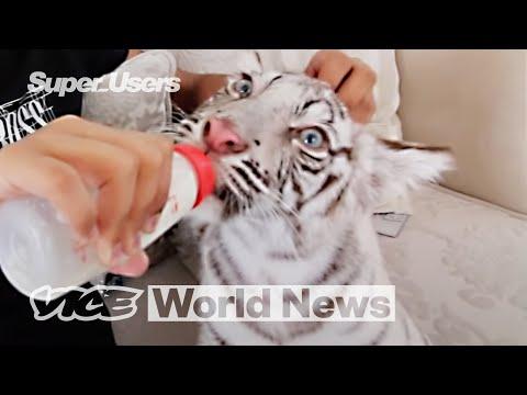 Exposing Dubai's Exotic Animal Trade via Instagram