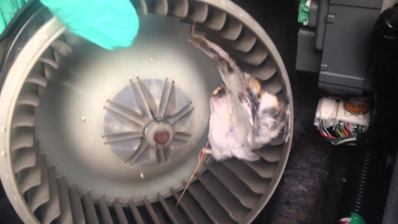 Mouse heater fan HONDA PILOT - YouTube
