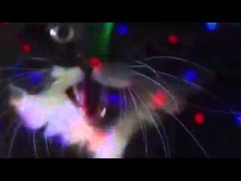 Miao mix