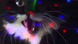 Video Miao mix download MP3, 3GP, MP4, WEBM, AVI, FLV Oktober 2017