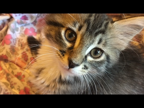 Tulip and Willow's Kittens Updates :)