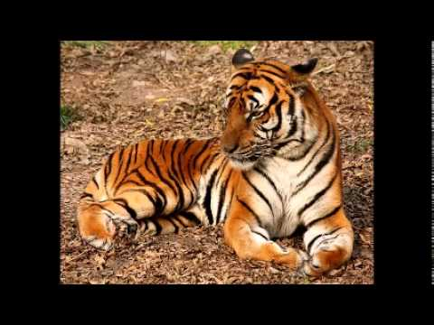 Chinese businessman jailed over tiger feast