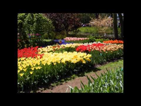 Flower exhibition 2015 in Holland