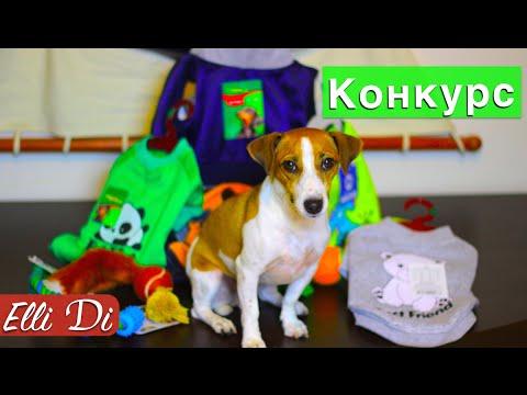 Одежда для собак. Продажа, поиск, поставщики и магазины, цены в украине.